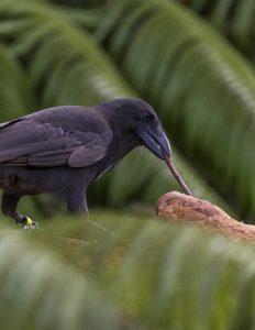 Credit: Ken Bohn / San Diego Zoo Global