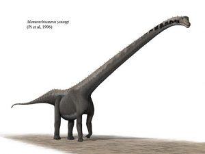 Slide 4_Mamenchisaurus_youngi_steveoc_86 (1)