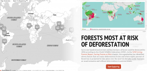 Crowe's StoryMap where you can explore our most at-risk forests and the pressures they face.
