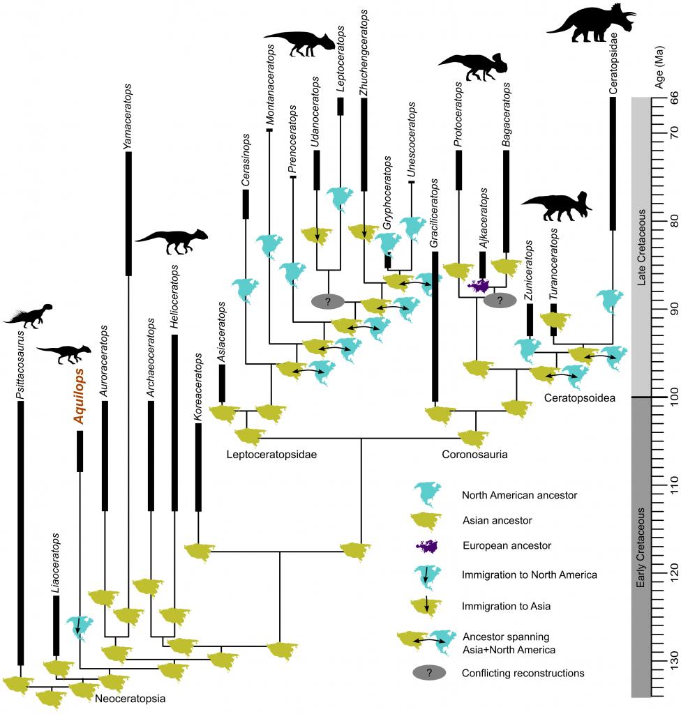 Phylogeny of horned dinosaurs, from Farke et al. 2014. CC-BY.