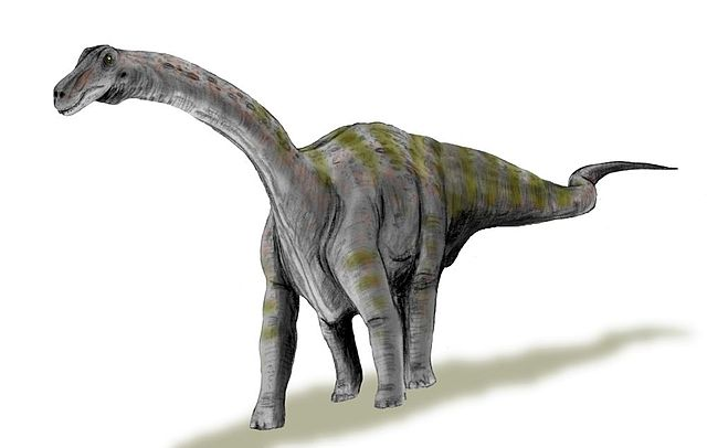 Rapetosaurus, a sauropod dinosaur that lived alongside Vahiny. Although they were only distantly related, they superficially probably looked pretty similar. Image by Nobu Tamura, CC-BY.
