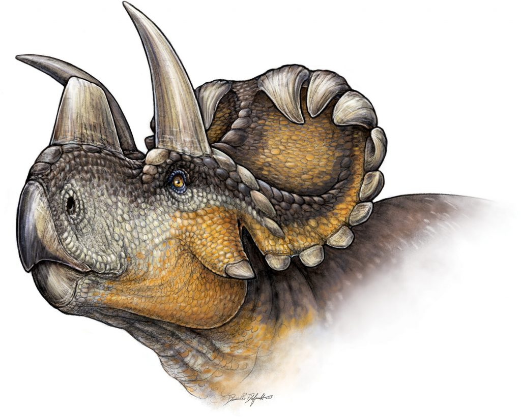 Wendiceratops in life, as restored by artist Danielle Dufault. CC-BY, from Evans and Ryan 2015.